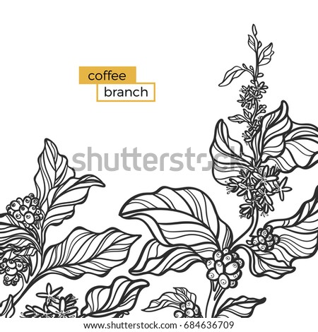 template black branch coffee tree leaves stock vector royalty free
