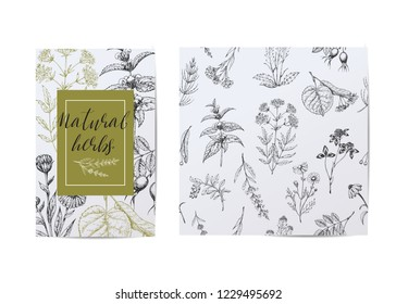 Template card with medicinal herbs. Seamless vector pattern. Wild healing plants. Vintage flowers. Hand drawing illustration. Engravings style. Botanical illustration. Pharmacy natural herbs.