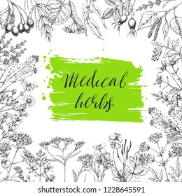 Template card with medicinal herbs. Wild healing plants. Vintage flowers. Hand drawing illustration. Engravings style. Botanical illustration. Pharmacy herbs. Sketch. Frame with medical plants.