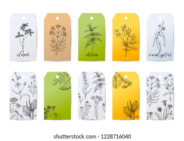 Template card with medicinal herbs. Wild healing plants. Vintage flowers. Hand drawing illustration. Engravings style. Botanical illustration. Pharmacy herbs. Sketch. Tags with medical plants.
