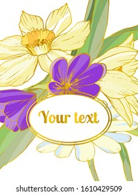 Template for greeting card, post card, invitation, etc. Composition with spring flowers: narcissus, tulip, crocus, leaves and gold frame for text on white or blue background. Can be used for cover