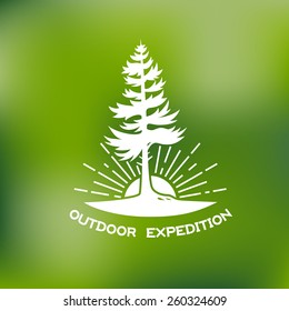 Template for logos, labels and emblems with spruce, sun and rays. Vector illustration.