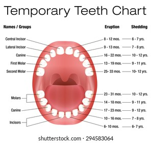 Lower teeth images stock photos vectors shutterstock temporary teeth names groups period of eruption and shedding of the children ccuart Choice Image