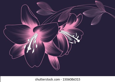 Tender abstract background with pink flowers of lilies on a purple background.