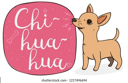 Tender and mischievous Chihuahua of tan and short hair, barking at a sign with doodles.