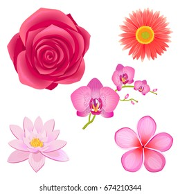 Tender saturated pink rose bud, peach dahlia, wonderful orchid, Chinese lotus and sakura blossom isolated vector illustrations set.