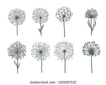 Tender wild dandelion in all phases of blooming.