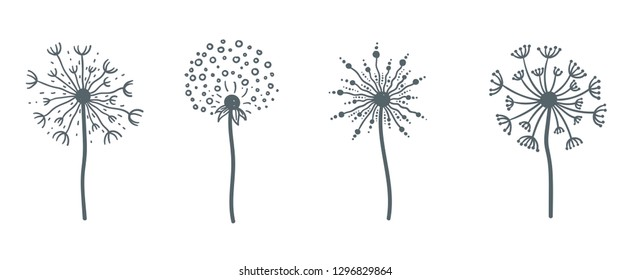 Tender wild dandelion in all phases of blooming. Flower with fresh petals and small seeds on thin stem with leaves isolated cartoon flat monochrome vector illustrations set on white background.
