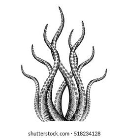 Tentacle Illustration