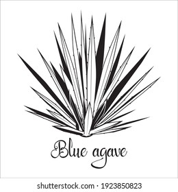 Tequila agave black silhouette. Vector illustration isolated on white background. Blue agave succulent plant stencil.