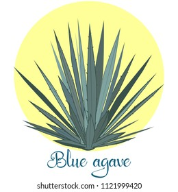 Tequila agave plant or blue agave. Vector illustration isolated on white background.
