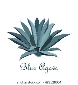 Tequila blue agave. Realistic vector illustration for label, poster, or web.