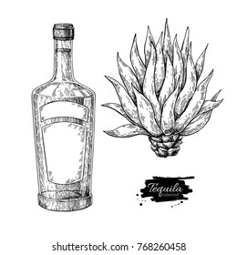 Tequila bottle with blue agave. Mexican alcohol drink vector drawing. Sketch of cocktail with natural ingredient. Engraved illustration for label, icon, bar or restaurant menu.