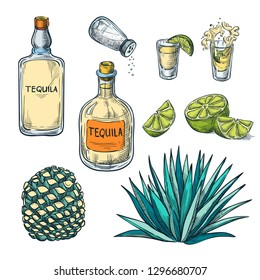 Tequila bottle, shot glass and agave root ingredients, vector color sketch illustration. Mexican alcohol drinks menu design elements.