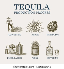 Tequila production process. Glass bottle, shot with lime, Distilled alcohol, blue agave Plant, barrel and farmer and harvest. Retro poster or banner. Engraved hand drawn vintage sketch.