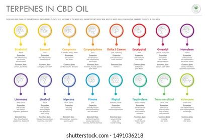 Terpenes in CBD Oil with Structural Formulas horizontal business infographic illustration about cannabis as herbal alternative medicine and chemical therapy, healthcare and medical science vector.