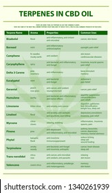 Terpenes in CBD Oil vertical infographic illustration about cannabis as herbal alternative medicine and chemical therapy, healthcare and medical science vector.