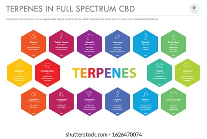 Terpenes in Full Spectrum CBD with Structural Formulas horizontal business infographic illustration about cannabis as herbal alternative medicine and chemical therapy, healthcare and medical vector.