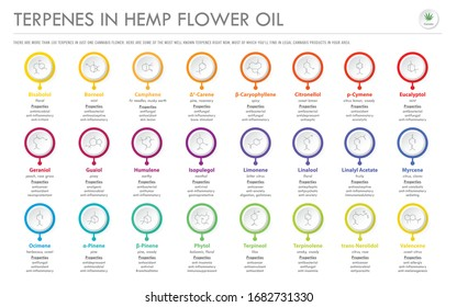Terpenes in Hemp Flower Oil with Structural Formulas horizontal business infographic illustration about cannabis as herbal alternative medicine and chemical therapy, healthcare and medical vector.