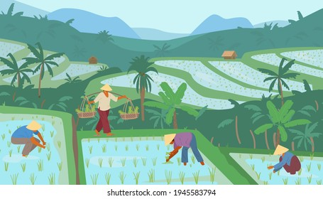 Terraced Asian Rice Fields In Mountains With Workers In Conical Straw Hats. Traditional Agriculture. Vector Illustration.