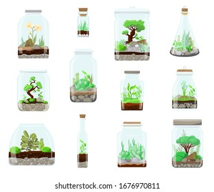 Terrarium Nature green plant in glass garden, plant on decoration natural botany vector cartoon illustration isolated on white. Ecosystem grow in terrarium bottle compose. Succulent, tree, flower