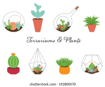 Terrariums  and Plants Collection in Vector