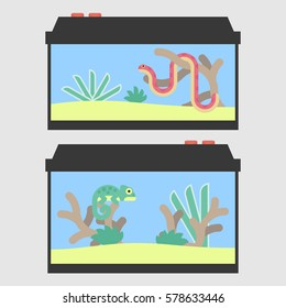 Terrariums for a snake and chameleon in flat style. Vector illustration of reptile tanks for pet shop.