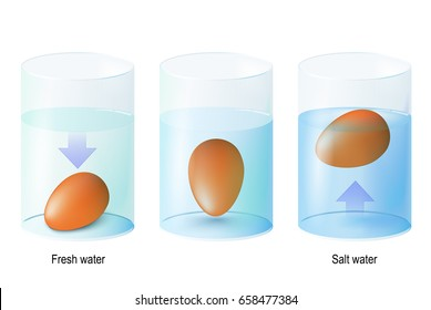test egg. Egg float. Science Experiments (Eggs dropped in fresh and salt water to show the properties of density.) and Test Eggs for Freshness (The fresh egg will sink but the rotten one will float).