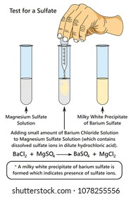 Test for a Sulfate infographic diagram showing a laboratory experiment indicates presence of sulfate ions when adding barium chloride solution to magnesium sulfate for chemistry science education