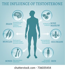 Testosterone effects Infographic image isolated on a light blue background. Male sex hormone and it s role in human body. Scientific, educational and popular-scientific concept.