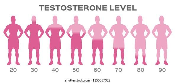 testosterone hormone level vector / man