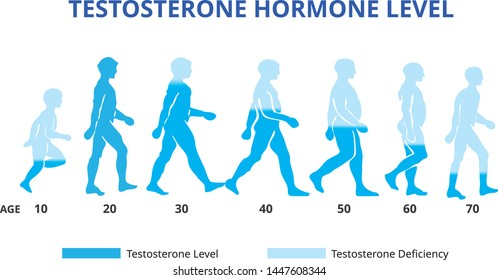 Testosterone hormone levels chart, vector