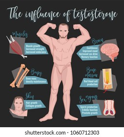 Testosterone influence infographic image isolated on a dark grey background. Male sex hormone and it s role in human body. Scientific, educational and popular-scientific concept.