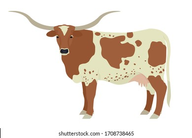 Texas Longhorn cow Breeds of domestic cattle Flat vector illustration Isolated object on white background set
