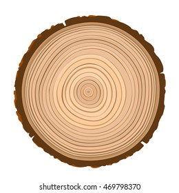 texture of inside wood brown object isolated