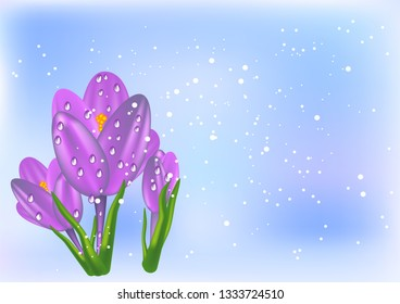 thee crocus and snow on abstract background