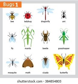 There are twelve different kinds of bugs isolated in white