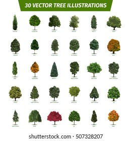 Thirty different tree sorts with names. Illustrated tree types and specimens. Ash, fir, oak, walnut, chestnut, cherry, apple tree, maple, pine, larch, birch, spruce, willow, walnut, aspen & other.
