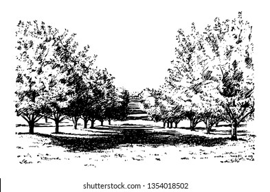 This illustration represents California Apple Orchard, vintage line drawing or engraving illustration.