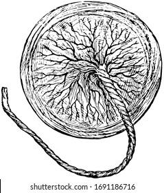 This illustration represents Human Placenta, vintage line drawing or engraving illustration.