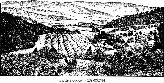 This illustration represents Piedmont Region of the Alleghanies, vintage line drawing or engraving illustration.
