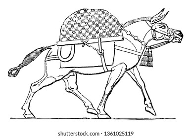 This is the image of the animal called mule. The animal life of Assyria was extremely varied. This image shows a mule from this area, vintage line drawing or engraving illustration.