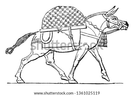 This Image Animal Called Mule Animal Stock Vector Royalty Free
