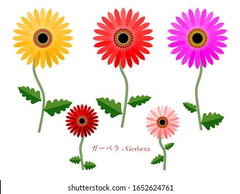 This is a simple illustration of gerbera.