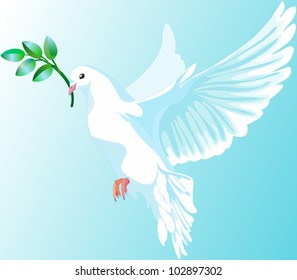 This is a white dove of peace, it is keeping the a green branch