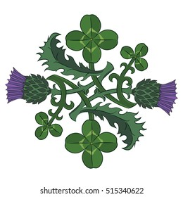 Thistle and Clover. The symbols of Ireland and Scotland. Twisted clover and Thistle, vector illustration