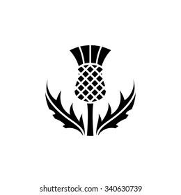 Thistle - floral emblem of Scotland, app symbol, design element, flat design illustration, vector