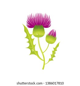 Thistle flower, floral icon. Realistic cartoon cute plant blossom, Scotland symbol. Summer or spring vector illustration for greeting card, t shirt print, decoration design. Isolated white background