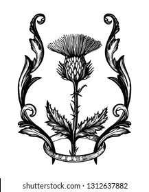 Thistle flower in ornament frame.The Symbol Of Scotland, isolated vector illustration.