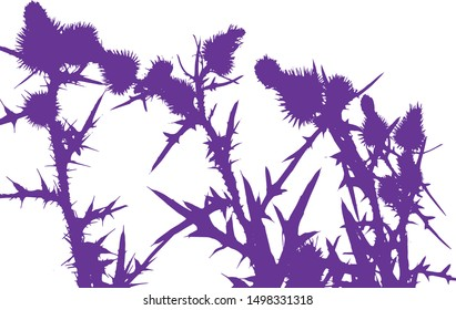 Thistle flowers group silhouette close-up. Thorny leaves of the plant. Wildflowers. Long spiky leaves on stems with small flowers. Isolated vector illustration. Black on white.